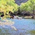 Grazing Salt River Horses by Micah Williams