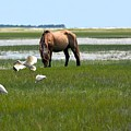 Grazing With The Ibis by Dan Williams