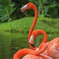 Great Birds by Samuel Jokich