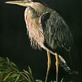 Great Blu Heron by Sue Kroll
