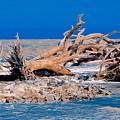 Great Blue Driftwood by Janal Koenig
