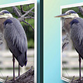 Great Blue Heron - Gently Cross Your Eyes And Focus On The Middle Image by Brian Wallace