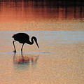 Great Blue Heron At Sunset by Pat Miller