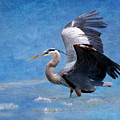 Great Blue Heron  by Betty LaRue