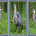 Great Blue Heron Collage by DigiArt Diaries by Vicky B Fuller