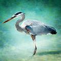 Great Blue Heron by Ellen Heaverlo