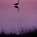 Great Blue Heron IIi by Brett Winn