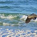 Great Blue Heron In Flight by Marie Hicks