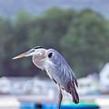 Great Blue Heron On Keuka Lake Horizontal Pano by Photographic Arts And Design Studio