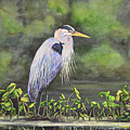 Great Blue Heron On Lily Pad by Laurie Tietjen