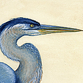 Great Blue Heron Portrait by Charles Harden