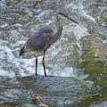 Great Blue Heron Standing In Stream by Wayne Heim