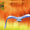 Great Blue Heron Winging It Photo Art by Sharon Talson