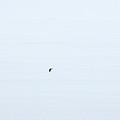 Great Cormorant In The Fog by Jouko Lehto