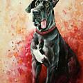 Great Dane by Anne Koivumaki - Fine Art Anne