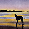 Great Dane At Sunset by David Rogers