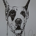 Great Dane  by Raymond Nash