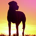 Great Dane Silhouette by Angela Edwards-Warburton