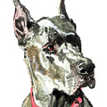 Great Dane Watercolor by Dan Pearce