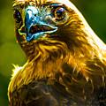Eagle by Alfredo Alegrett