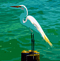 Great Egret Emerald Sea by David Lee Thompson