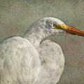 Great Egret by Hanny Heim