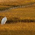 Great Egret In Morning Light by Kristia Adams