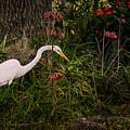 Great Egret In The Garden by Zina Stromberg