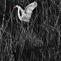 Great Egret Inthe Marsh by Blake Richards