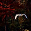 Great Egret Paradise Flight by Blake Richards