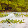Great Egret by Peter Lakomy