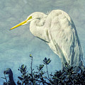 Great Egret by Susan Grube