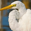 Great Egret by Terry  Wieckert