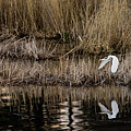 Great Egret's Flight To A New Position by Torbjorn Swenelius