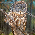 Great Grey Owl 2 by Sharon Duguay