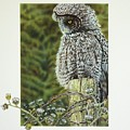 Great Grey Owl by Greg and Linda Halom