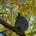 Great Horned Owl 2 by Teresa Stallings