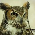 Great Horned Owl 8925 by Captain Debbie Ritter