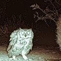 Great Horned Owl At Night In The Desert by Judy Kennedy