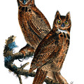 Great Horned Owl Audubon Birds Of America 1st Edition 1840 Royal Octavo Plate 39 by Orchard Arts