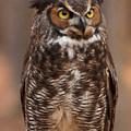 Great Horned Owl Digital Oil by Chris Flees