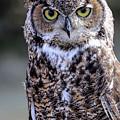 Great Horned Owl IIi by Athena Mckinzie