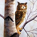 Great Horned Owl In Birch by Frank Wilson