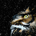 Great Horned Owl In The Snow by Tracy Munson