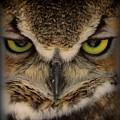 Great Horned Owl by Leah Grunzke