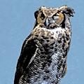 Great Horned Owl by Mary Lucuski