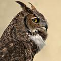 Great Horned Owl by Michael Gordon