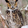 Great Horned Owl Nature Wear by LeeAnn McLaneGoetz McLaneGoetzStudioLLCcom
