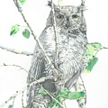 Great Horned Owl Perched In A Tree by Adrienne Deines