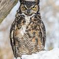 Great Horned Owl by Sue Matsunaga